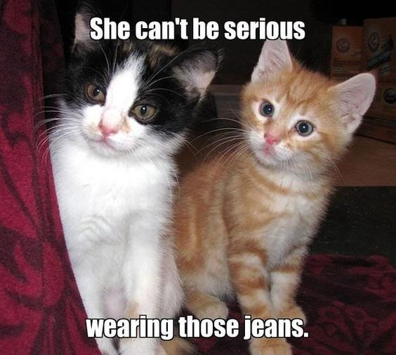 Cat - She can't be serious wearing those jeans.