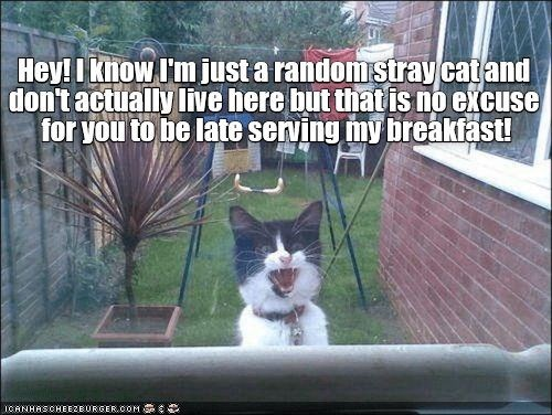 Cat - Hey! I khow I'm just a random stray catand don't actually live here but that is no excuse for you to be late serving my breakfast! ICANHASCHEE2E URGER cOM