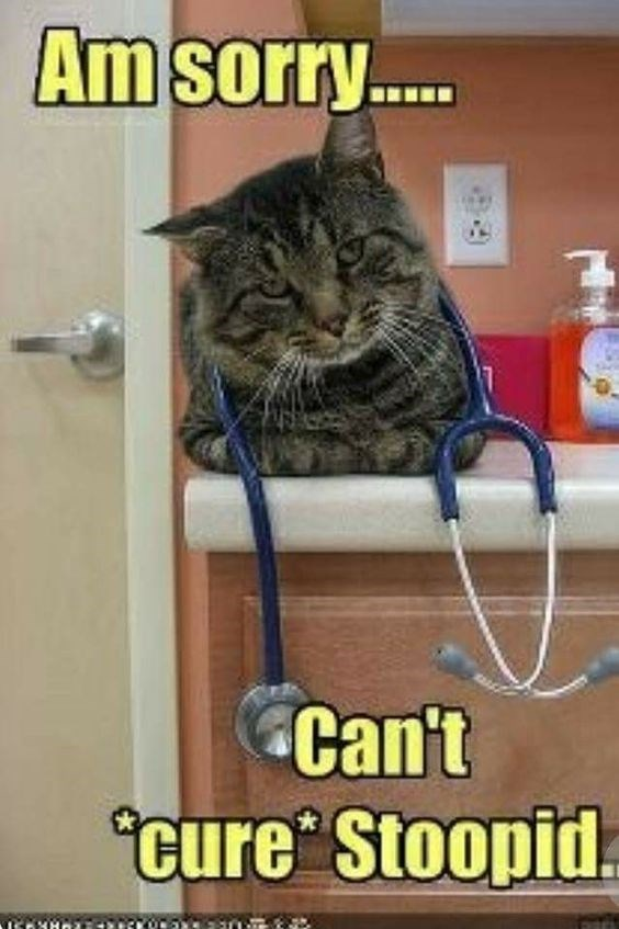 Cat - Am sorry... Can't cure Stoopid