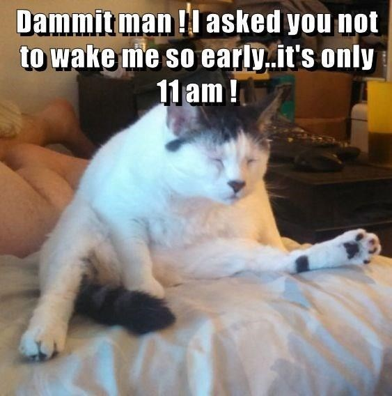 Cat - Dammit man ! asked you not to wake me so early.it's only 11 am !