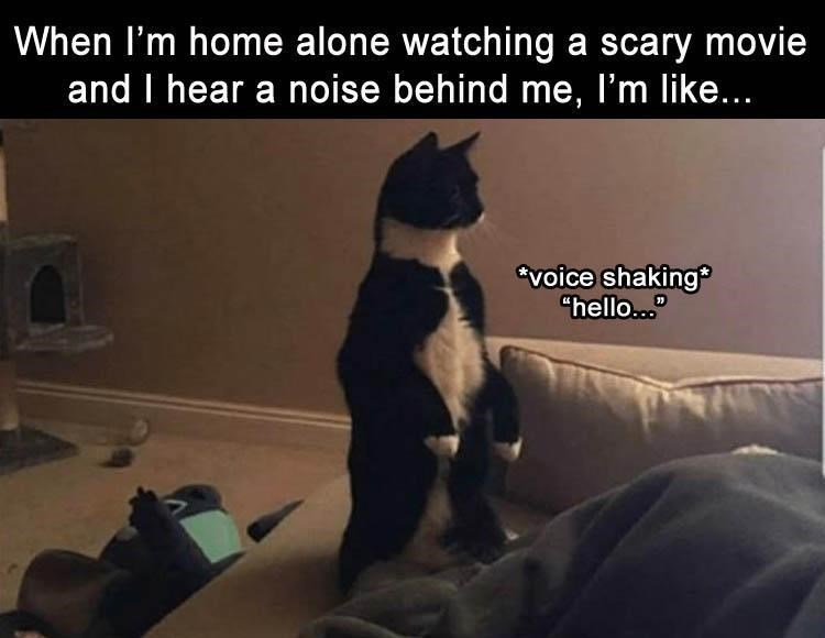 """Text - When I'm home alone watching a scary movie and I hear a noise behind me, I'm like... 'voice shaking """"hello..."""