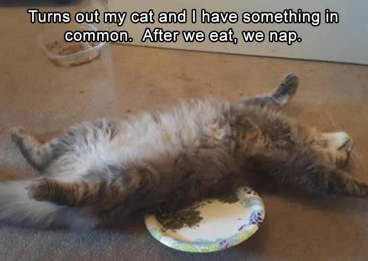 Cat - Turns out my cat and I have something in common. After we eat, we nap.
