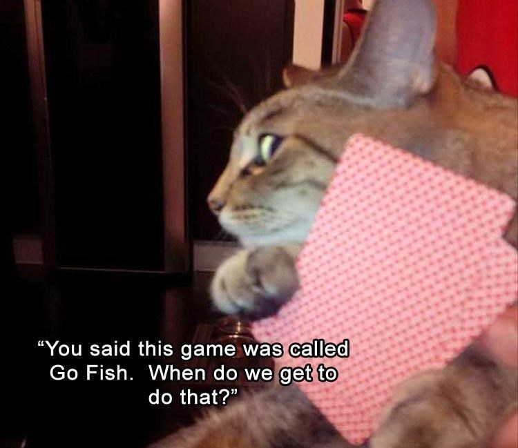 """Cat - """"You said this game was called Go Fish. When do we get to do that?"""""""