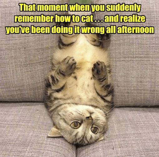cat meme upside down - 9208289792