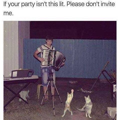 Funny meme about cat party.