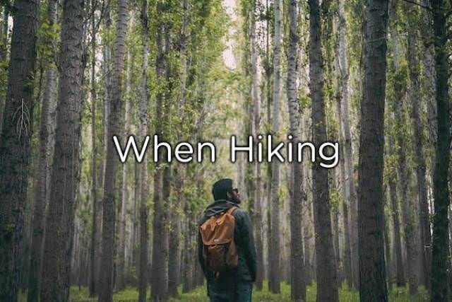 Tree - When Hiking