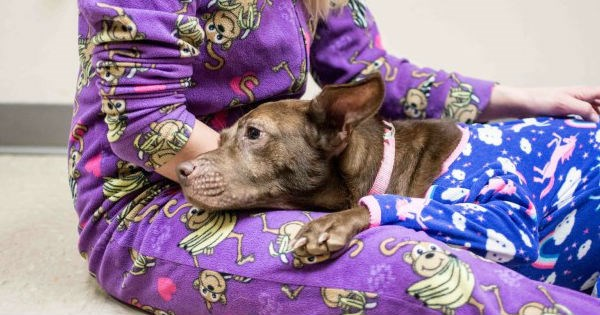 shelter,dogs,adoption,cute,sleepover,pajamas