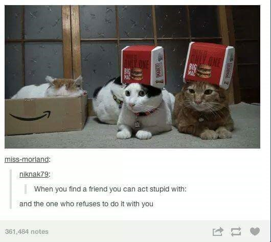 cat tumblt post about having the one friend who you can act stupid with