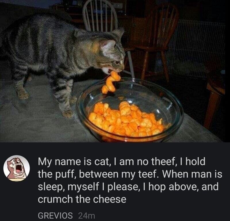 cat meme about a cat eating Cheetos