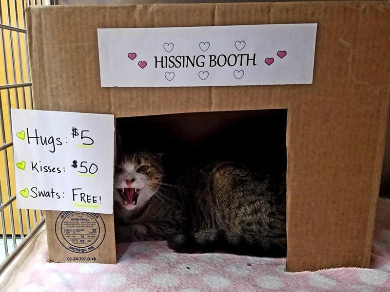 Funny meme about hissing booth.
