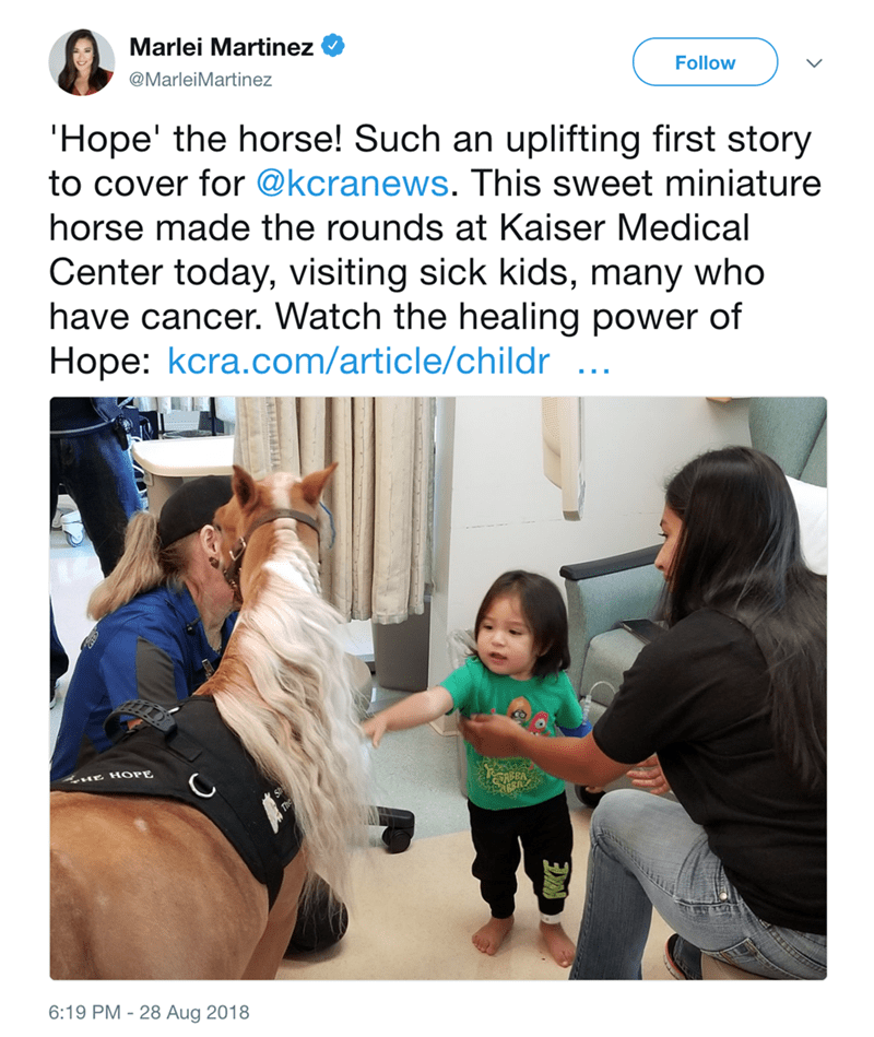 Text - Marlei Martinez Follow @MarleiMartinez 'Hope' the horse! Such an uplifting first story to cover for @kcranews. This sweet miniature horse made the rounds at Kaiser Medical Center today, visiting sick kids, many who have cancer. Watch the healing power of Hope: kcra.com/article/childr ... HE HOPE 6:19 PM - 28 Aug 2018