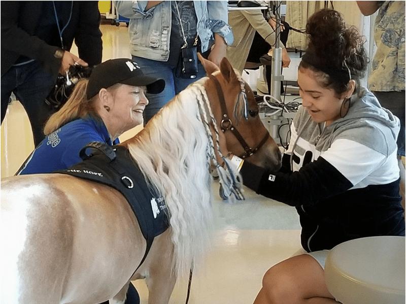 Mini Horse at children's hospital