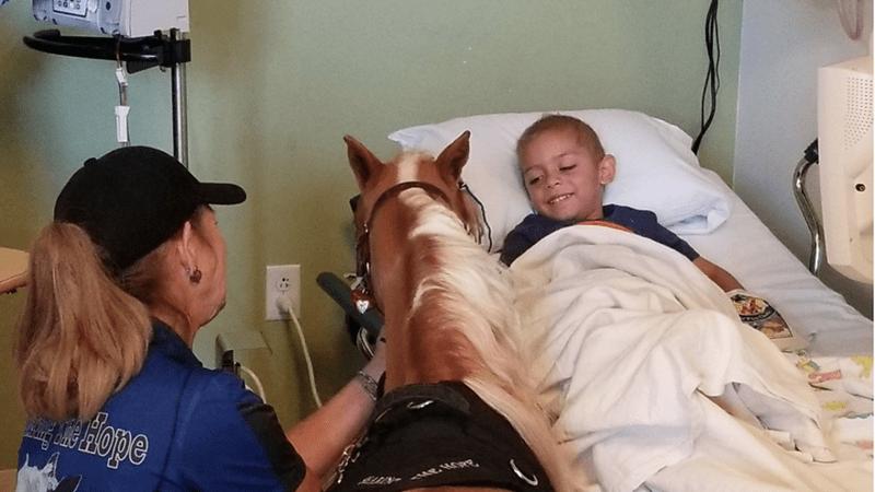 mini horse visiting the sick kids