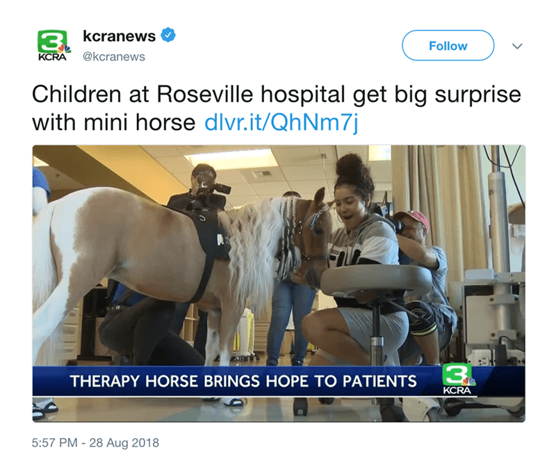 Website - 3 kcranews Follow @kcranewS KCRA Children at Roseville hospital get big surprise with mini horse dlvr.it/QhNm7j 3 THERAPY HORSE BRINGS HOPE TO PATIENTS KCRA 5:57 PM-28 Aug 2018
