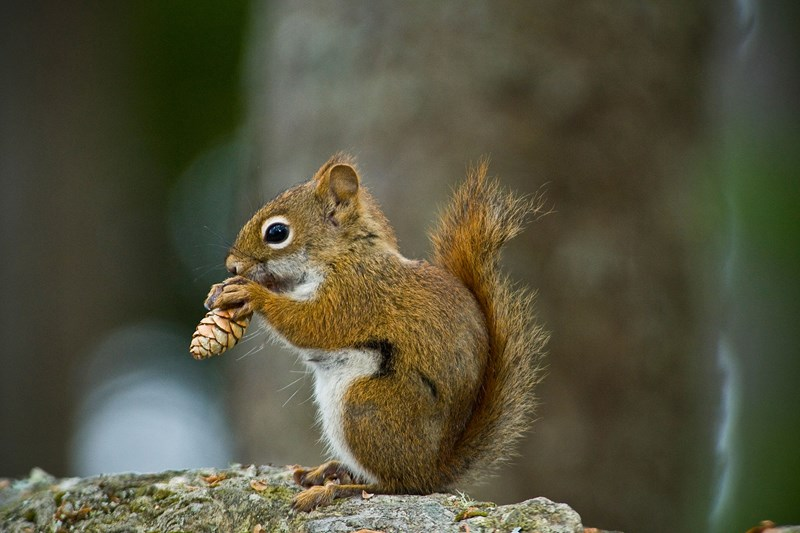 squirrels listen to birds conversations to know if they are in danger