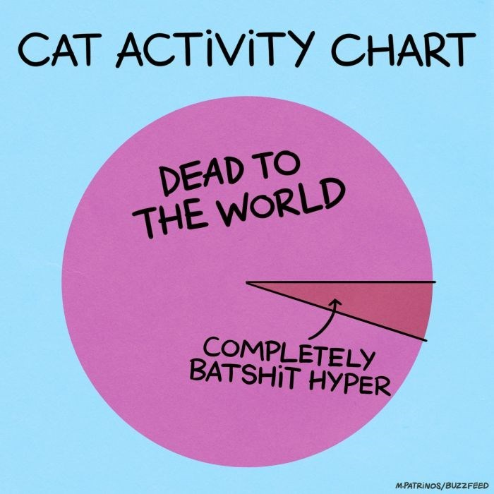 Text - CAT ACTIVITY CHART DEAD TO THE WORLD COMPLETELY BATSHIT HYPER M.PATRINOS/BUZZFEED