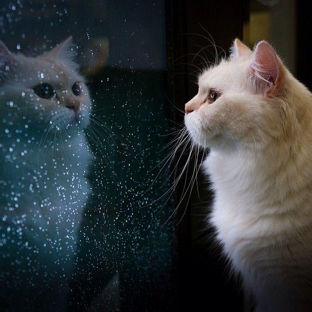 cats reflecting life cute