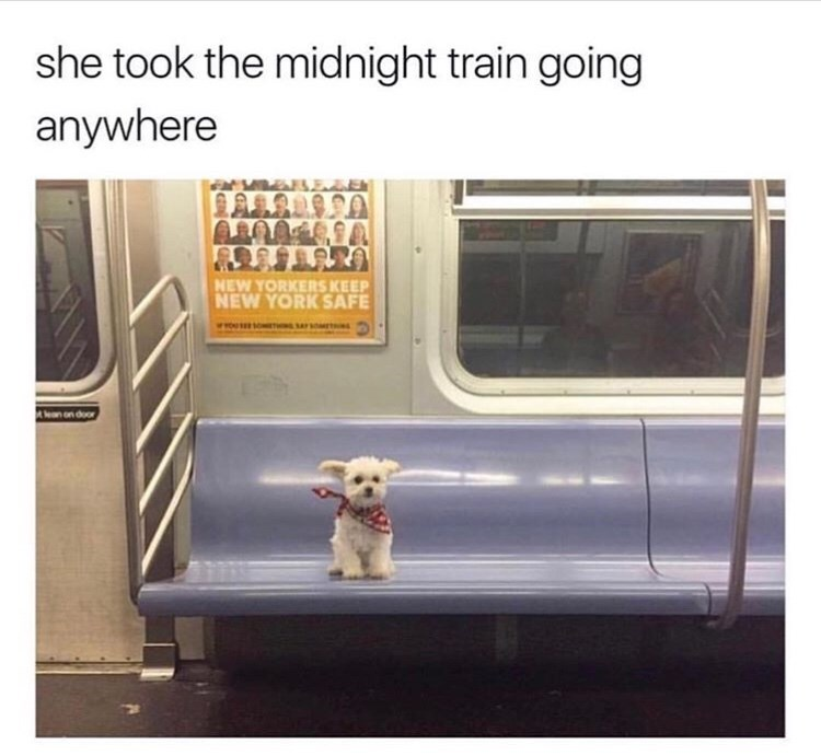 "Caption reads, ""She took the midnight train going anywhere"" above a pic of a dog sitting on a train seat"