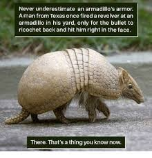 Vertebrate - Never underestimate an armadillo's armor Aman from Texas once fired a revolver at an armadillo in his yard, only for the bullet to ricochet back and hit him right in the face. There. That's a thing you know now.