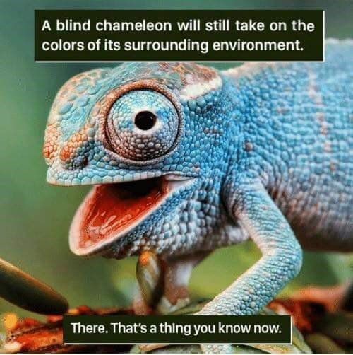 Chameleon - A blind chameleon will still take on the colors of its surrounding environment. There. That's a thing you know now.