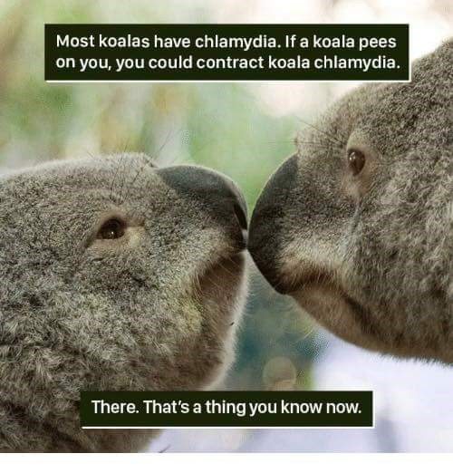 Vertebrate - Most koalas have chlamydia. If a koala pees on you, you could contract koala chlamydia. There. That's a thing you know now.