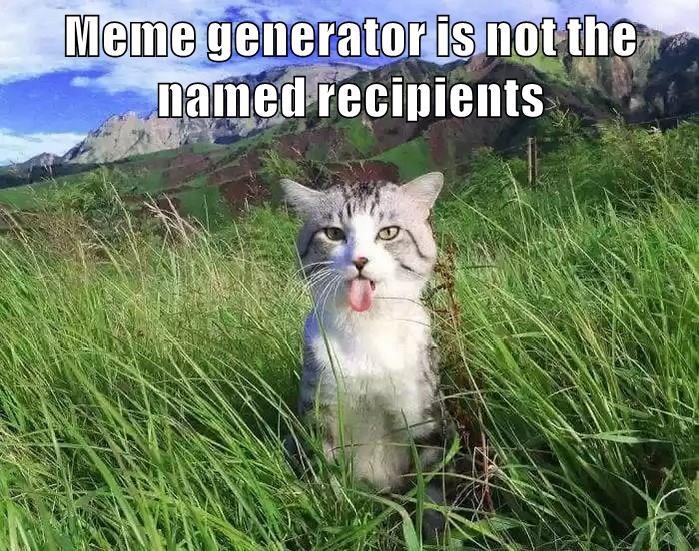 meme generator cat meme