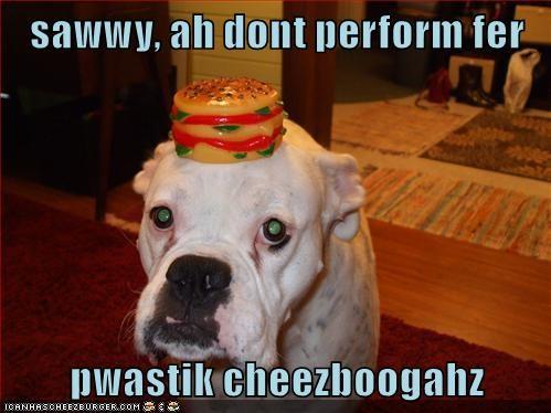 Cheezburger Image 9209571072