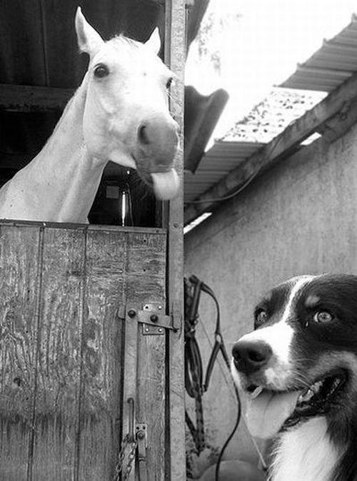 photobomb - horse and dog