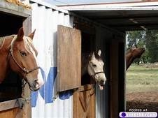 photobombing horse
