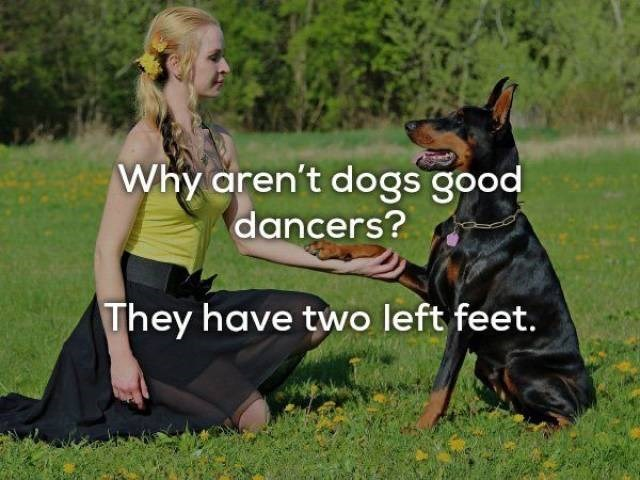 Dog - Why aren't dogs good dancers? They have two left feet.