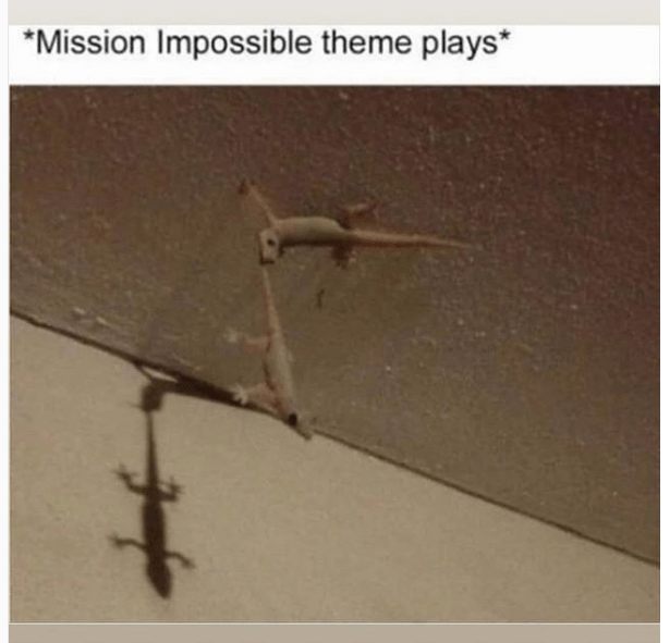 "Caption that reads, ""Mission Impossible theme plays"" above a pic of a gecko holding up another gecko by the tail on the ceiling"