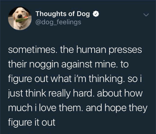 """Tweet from Thoughts of Dog that reads, """"Sometimes the human presses their noggin against mine to figure out what I'm thinking, so I just think really hard abut how much I love them and hope they figure it out"""""""