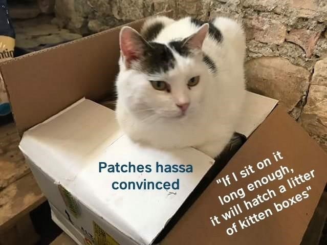 Patches hassa convinced