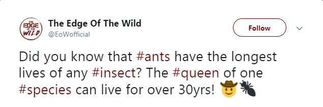 Text - The Edge Of The Wild EDGE Follow WILD@EoWofficial Did you know that #ants have the longest lives of any #insect? The #queen of one #species can live for over 30yrs!