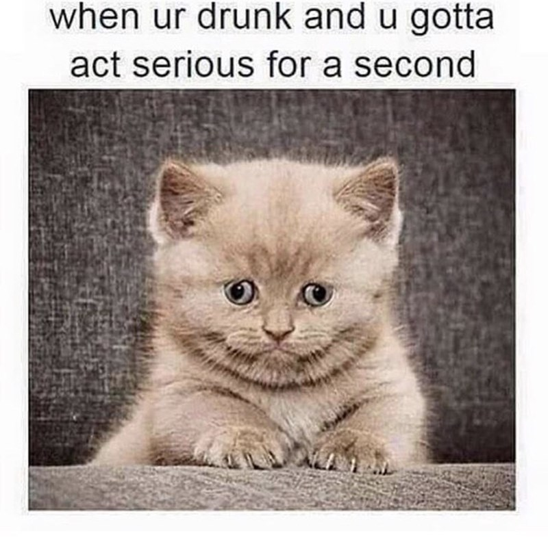 thirsty thursday meme of a kitten and comparing it to trying to act normal when you're drunk