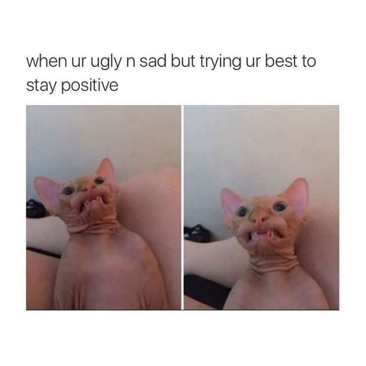 """Caption reads, """"When you're ugly and sad but trying your best to stay positive"""" above pics of an ugly hairless cat"""