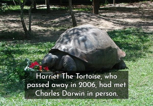 Tortoise - Harriet The Tortoise, who passed away in 2006, had met Charles Darwin in person.