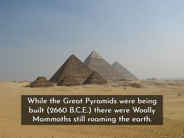 Pyramid - While the Great Pyramids were being built (2660 B.C.E.) there were Woolly Mammoths still roaming the earth.