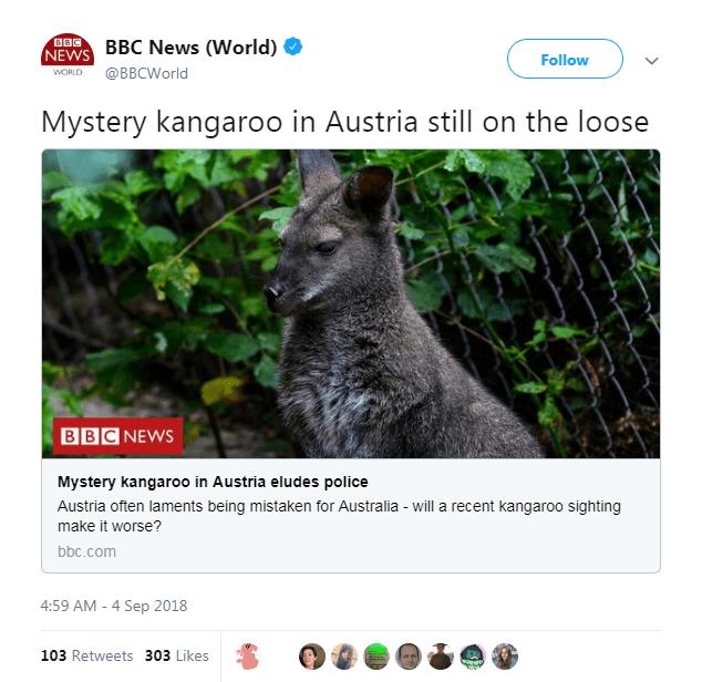 Wildlife - BOC NEWS BBC News (World) Follow WORLD @BBCWorld Mystery kangaroo in Austria still on the loose BBC NEWS Mystery kangaro0 in Austria eludes police Austria often laments being mistaken for Australia - will a recent kangaroo sighting make it worse? bbc.com 4:59 AM - 4 Sep 2018 103 Retweets 303 Likes