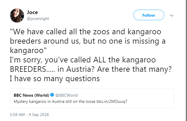 """Text - Joce Follow @jocenright """"We have called all the zoos and kangaroo breeders around us, but no one is missing a kangaroo"""" I'm sorry, you've called ALL the kangaroo BREEDERS... .in Austria? Are there that many? I have so many questions BBC News (World)@BBCWorld Mystery kangaroo in Austria still on the loose bbc.in/2MOuuq7 5:58 AM -4 Sep 2018"""