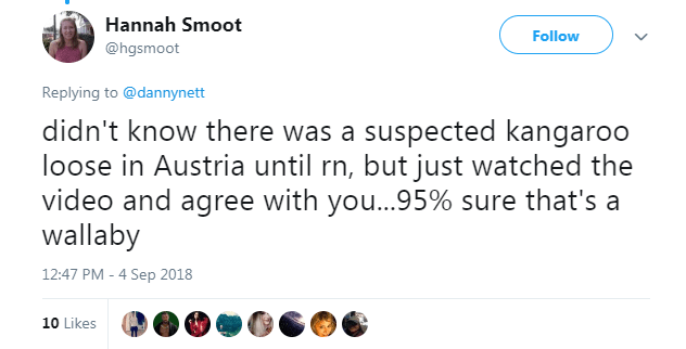 Text - Hannah Smoot Follow @hgsmoot Replying to@dannynett didn't know there was a suspected kangaroo loose in Austria until rn, but just watched the video and agree with you...95% sure that's a wallaby 12:47 PM - 4 Sep 2018 10 Likes