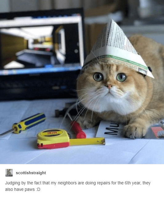 orange scottish straight cat wearing newspaper hat with tools in front of it