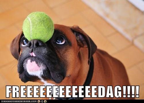Cheezburger Image 9210811648