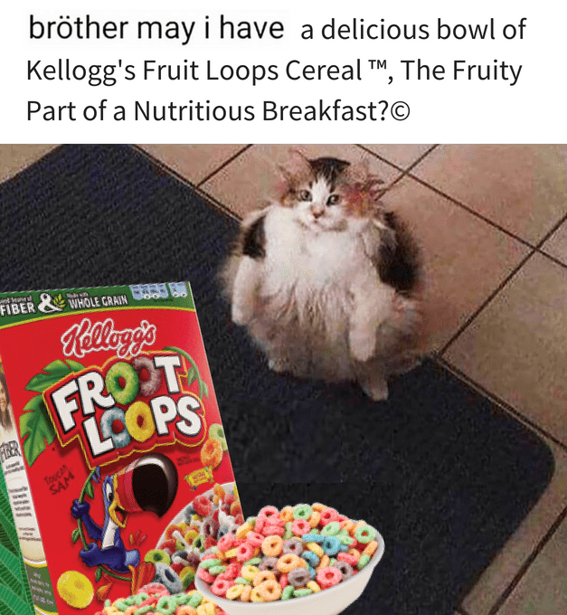 Cat - bröther may i have a delicious bowl of Kellogg's Fruit Loops Cereal TM, The Fruity Part of a Nutritious Breakfast?O FIBER WHOLE GRAIN A Ralleyg's FROOT LCOPS FIRER Toucan