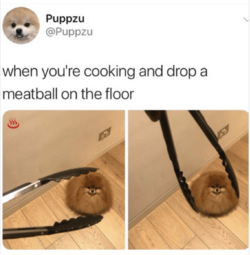 meme - Organism - Puppzu @Puppzu when you're cooking and drop a meatball on the floor