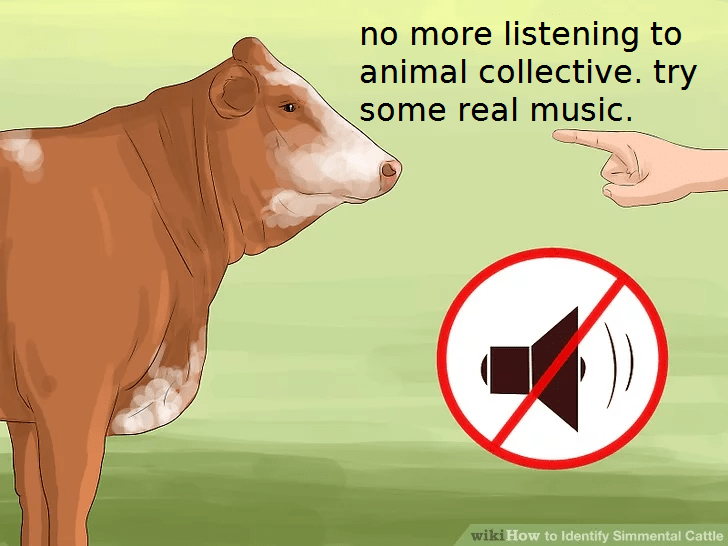 wikihow meme - Bovine - no more listening to animal collective. try some real music. wiki How to Identify Simmental Cattle