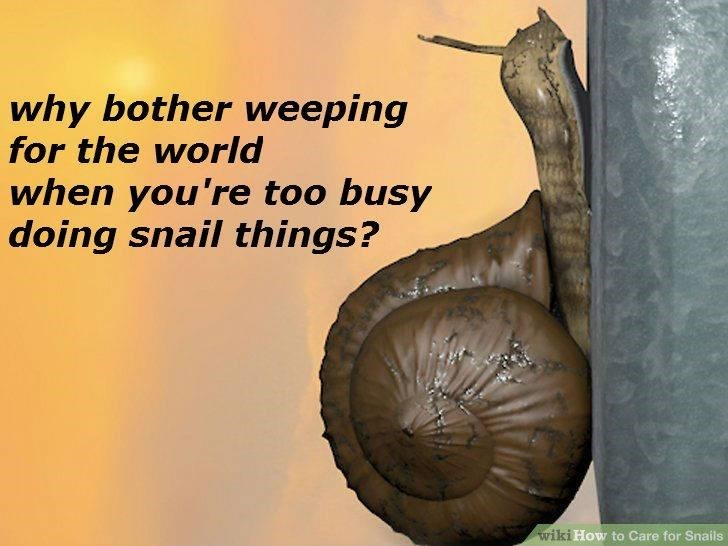 wikihow meme - Lymnaeidae - why bother weeping for the world when you're too busy doing snail things? wiki How to Care for Snails