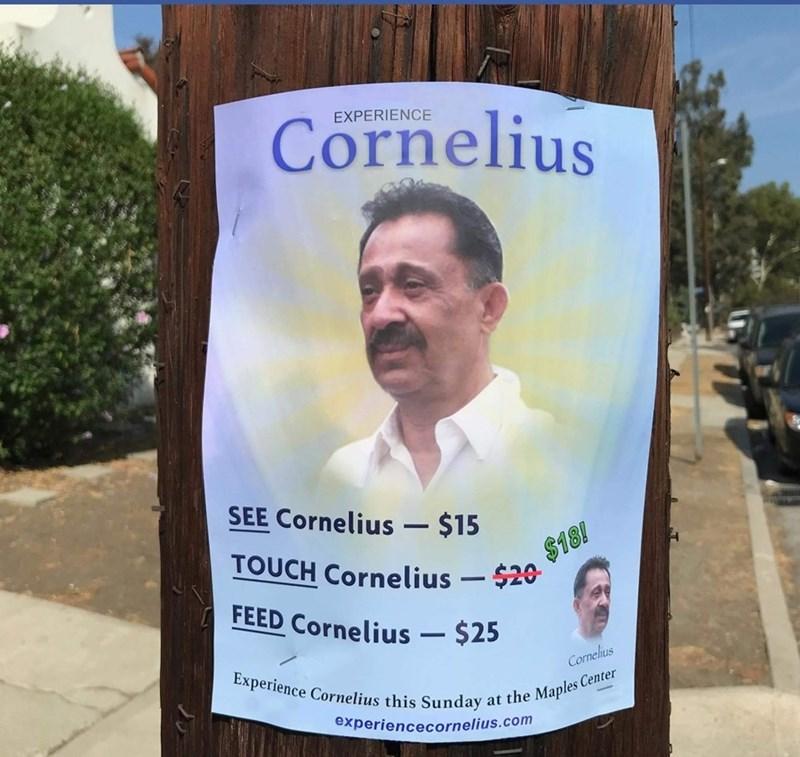 Advertising - Cornelius EXPERIENCE SEE Cornelius- $15 TOUCH Cornelius $20 $18! FEED Cornelius $25 Experience Cornelius this Sunday at the Maples Center Cornelius experiencecornelius.com