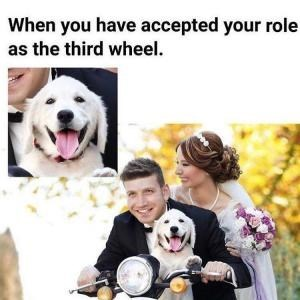 Dog - When you have accepted your role as the third wheel.