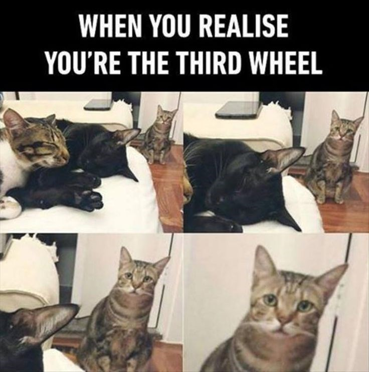 Cat - WHEN YOU REALISE YOU'RE THE THIRD WHEEL
